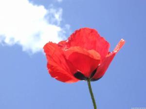sky flower