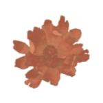 flor flamor